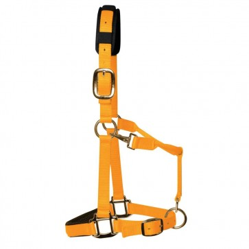 KM Elite Padded Headcollar Orange