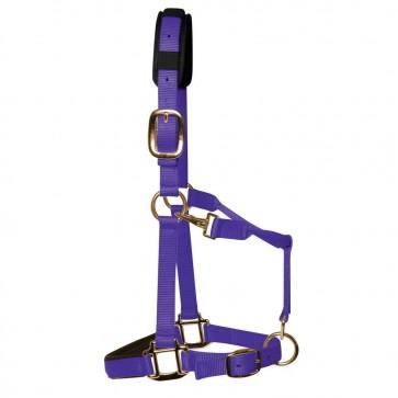 KM Elite Padded Headcollar Purple