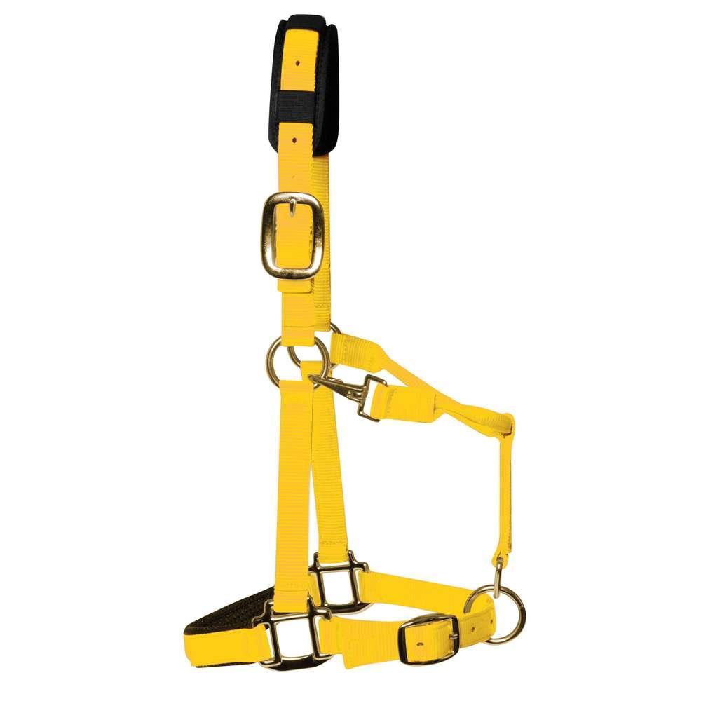 KM Elite Padded Headcollar Yellow